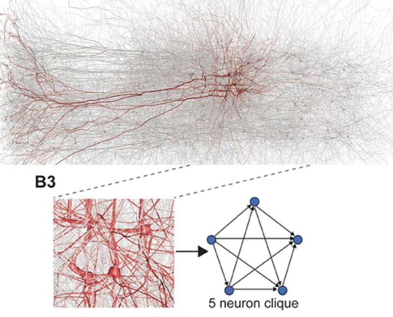cérebro em 11 dimensões