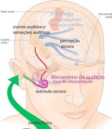 Psicoacustica - sistema audição humana